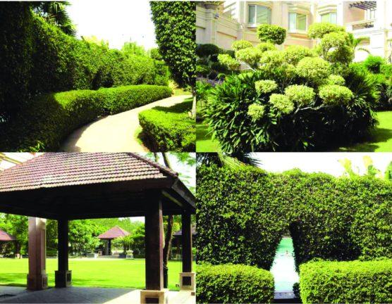 Landscape Company in Chandigarh